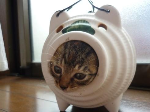蚊取り線香に入る猫